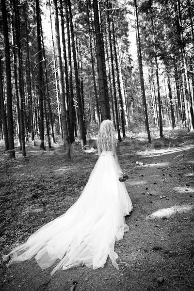 Fairy lady Stock photo © blanaru