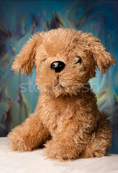Toy-dog portrait Stock photo © blanaru
