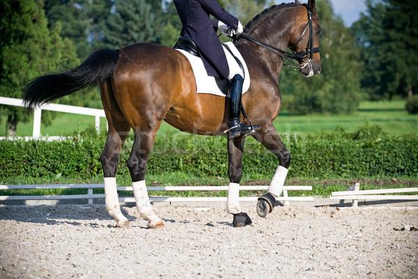 Horse dressage Stock photo © blasbike