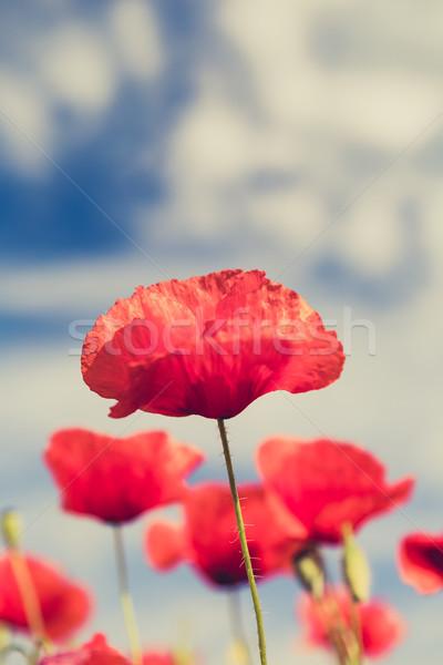 Papoula flores retro vintage verão raso Foto stock © blasbike