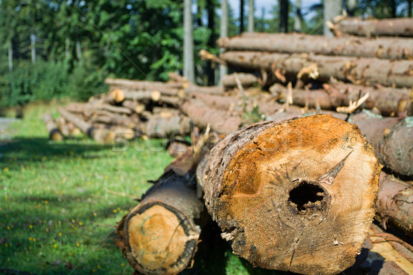 Forest deforestation Stock photo © blasbike