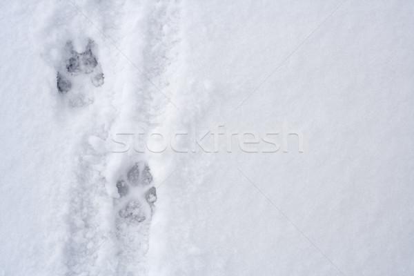 Dier voetafdrukken sneeuw hond abstract winter Stockfoto © blasbike