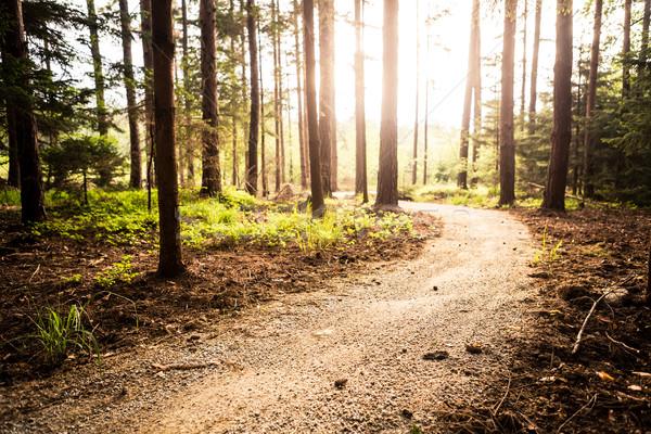Hiking path and sunset in beautiful woods Stock photo © blasbike