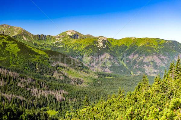 Bergen landschap zomer Stockfoto © blasbike