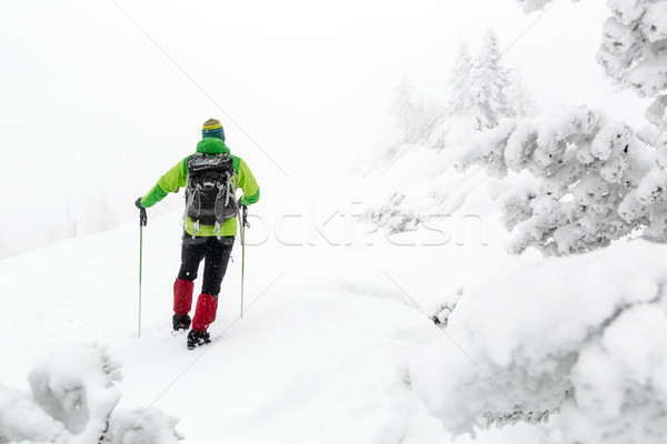 Winter hike in white woods, blizzard and snowing Stock photo © blasbike