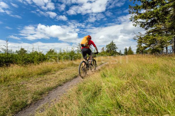 Górskich rowerowe jazda konna lesie góry Zdjęcia stock © blasbike