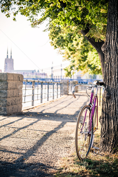 Stock photo: Road fixed bicycle on city street under tree