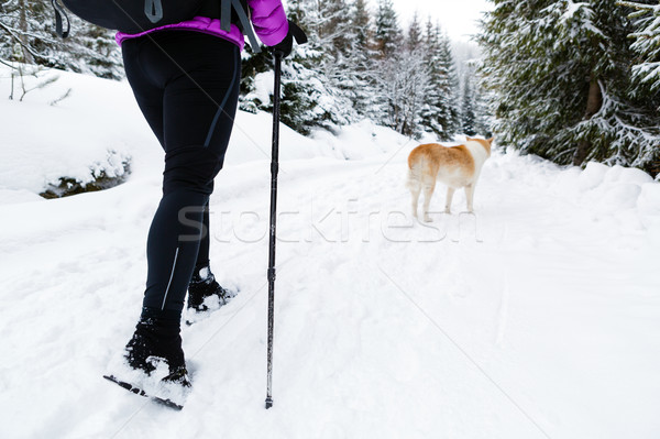 Backpacker hiking walking in winter forest with dog Stock photo © blasbike