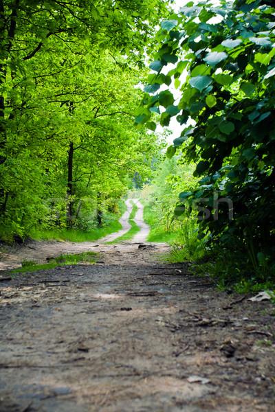 Estrada rural verão floresta árvore estrada folha Foto stock © blasbike