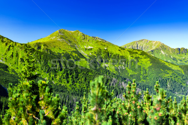 Inspiring Mountains Landscape, sunny day in summer Tatras Stock photo © blasbike