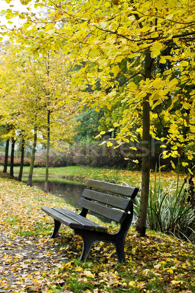 Bench in autumn forest Stock photo © blasbike
