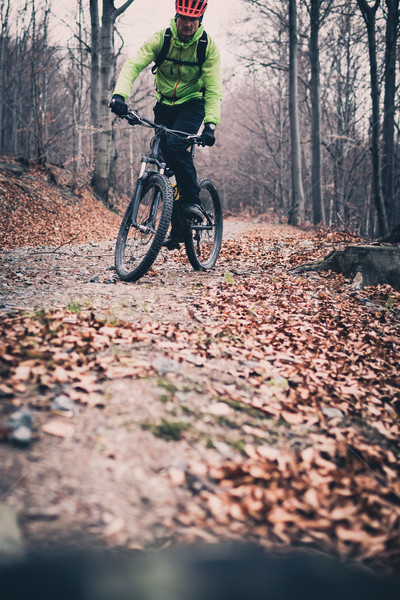Mountain biker on cycle trail in woods Stock photo © blasbike