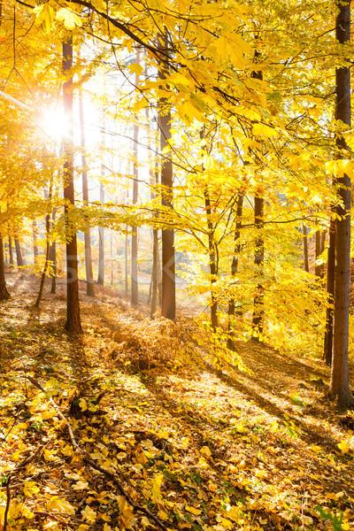 Outono floresta inspirado paisagem cair cenário Foto stock © blasbike