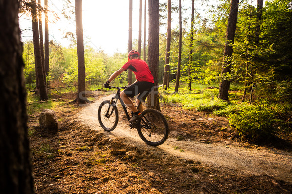 Stock photo: Mountain biker riding cycling in summer forest