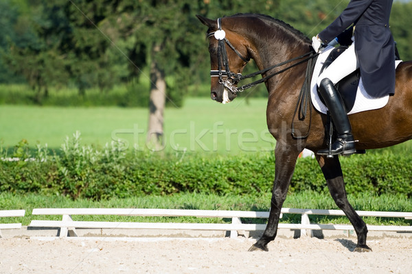 Horse dressage Stock photo © blasbike