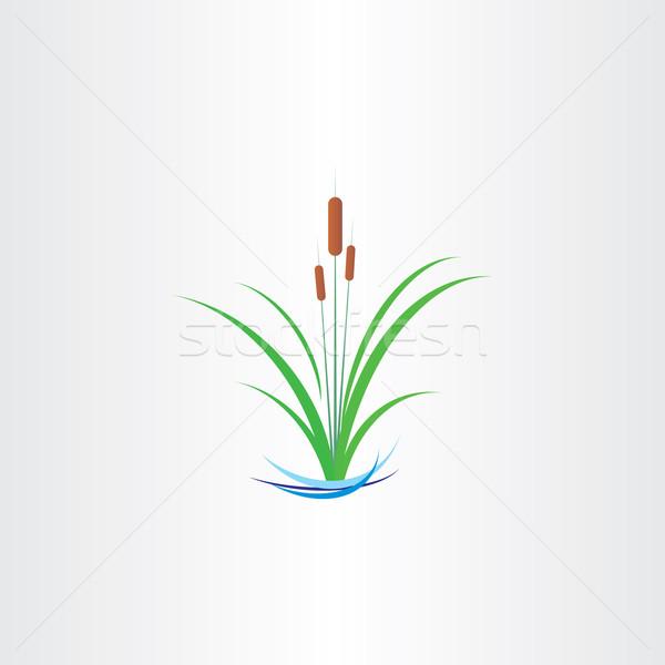 green reed bulrushes vector design Stock photo © blaskorizov