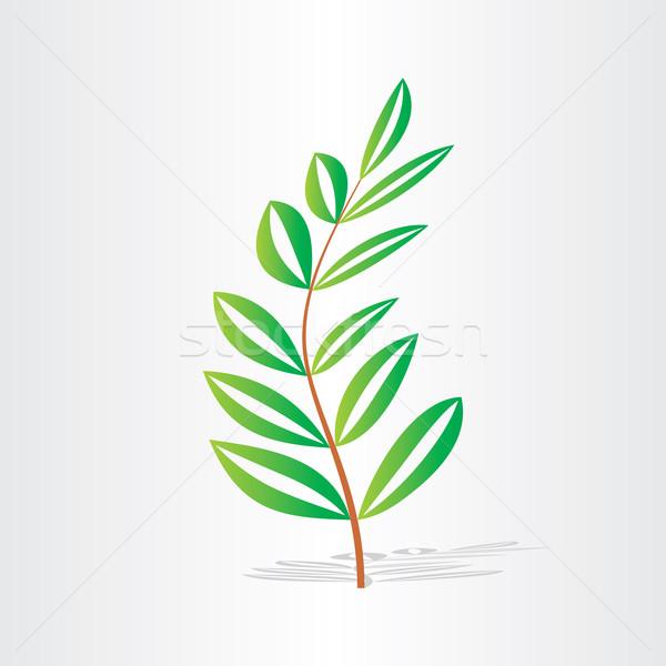 Hojas verdes frescura textura orgánico botánica Foto stock © blaskorizov