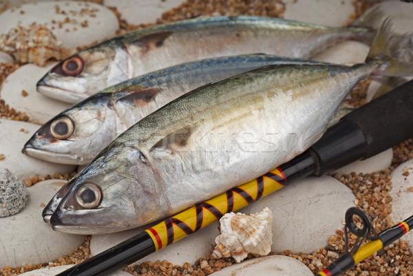 Indiai ázsiai tengeri hal tenger étel felszerlés Stock fotó © blinztree