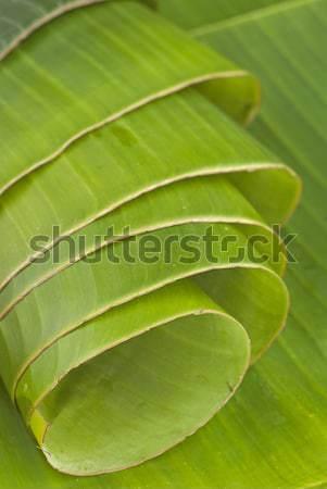 Jungen Bananen Blätter natürlichen Essen asian Stock foto © blinztree