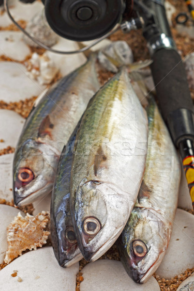 Hint deniz Asya taze yemek deniz ürünleri Stok fotoğraf © blinztree