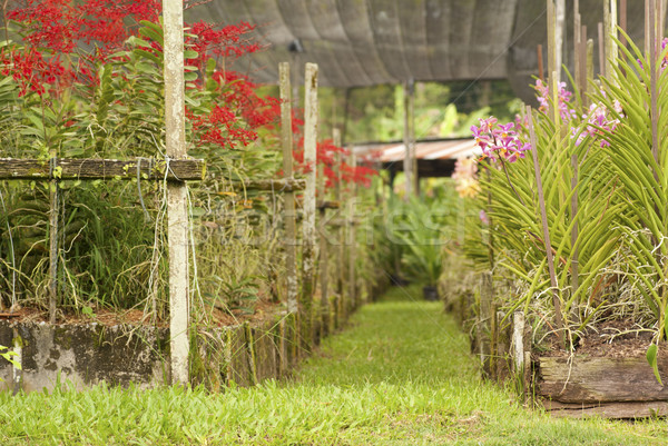 Orkide bahçe tropikal çiftlik Malezya Stok fotoğraf © blinztree