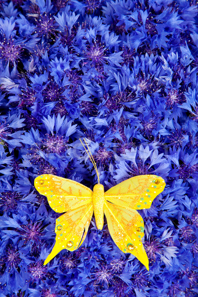 Spring blue cornflower with yellow butterfly Stock photo © bloodua
