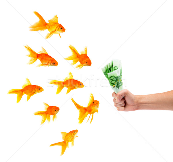 Goldfisch Geld weiß Geschäftsmann Gold Erfolg Stock foto © bloodua