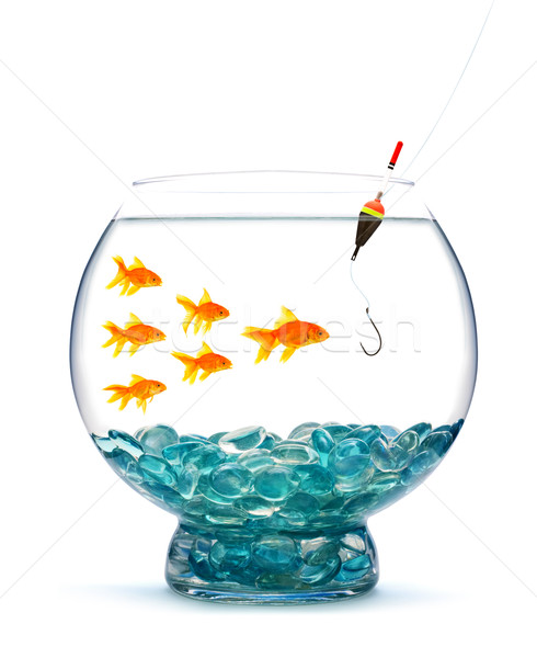 Goldfish aquarium blanche eau poissons sport Photo stock © bloodua