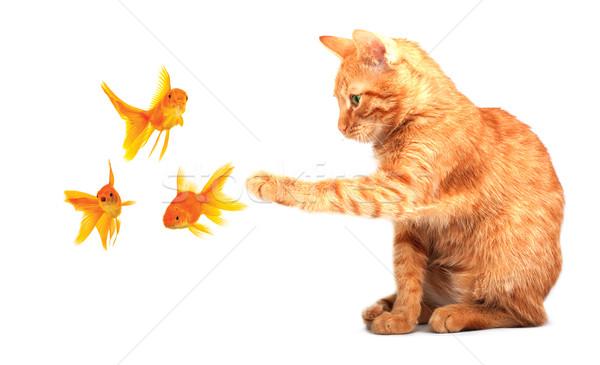 Foto stock: Gato · jogar · isolado · branco · peixe · natureza