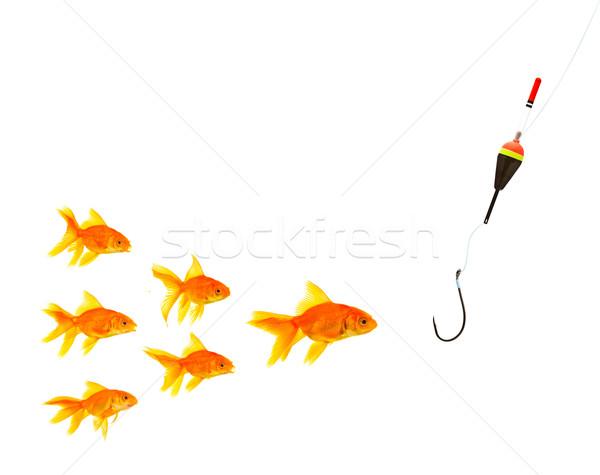 Peixe-dourado aquário branco água peixe esportes Foto stock © bloodua