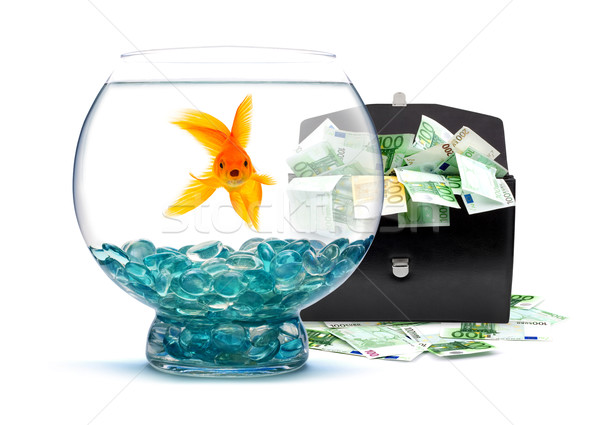 Goldfish dinero acuario blanco agua peces Foto stock © bloodua
