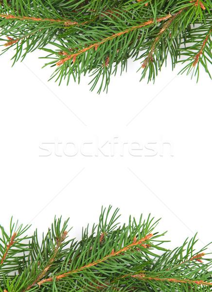 Christmas struktura zielone odizolowany biały lasu Zdjęcia stock © bloodua