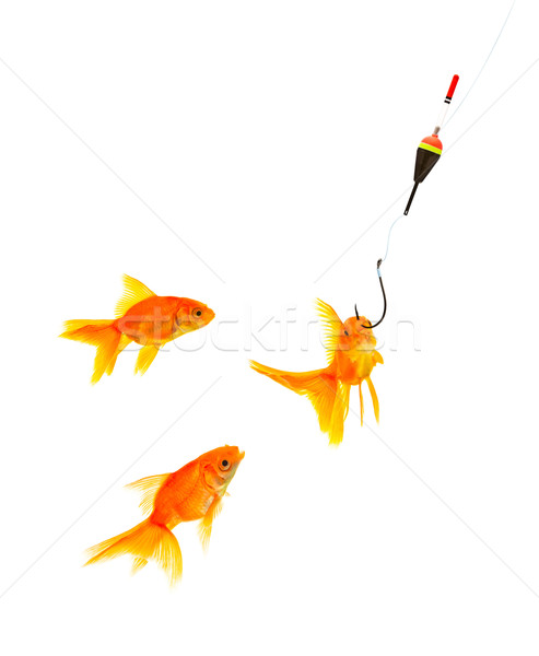 Goldfishes and cat Stock photo © bloodua