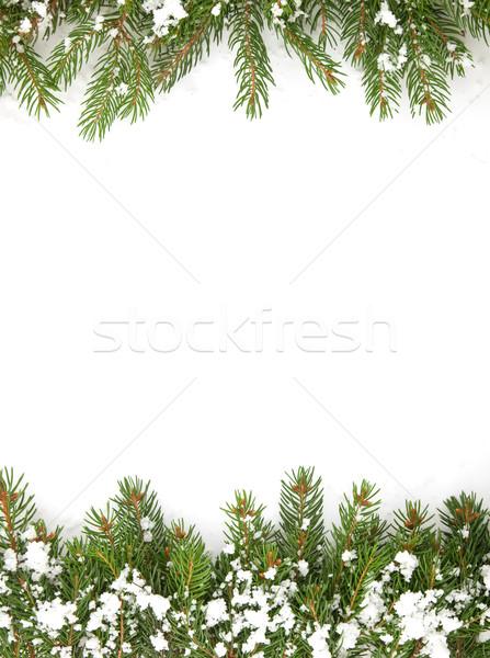 Christmas struktura śniegu odizolowany biały lasu Zdjęcia stock © bloodua