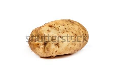 One potato isolated on white Stock photo © bloodua