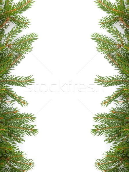 クリスマス フレームワーク 緑 孤立した 白 森林 ストックフォト © bloodua