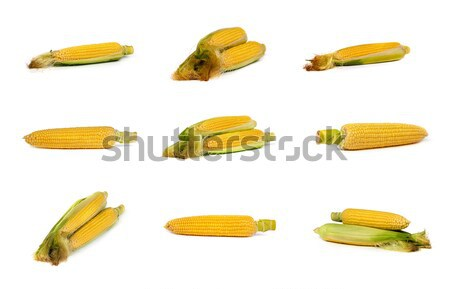 set of uncooked corn on the cob Stock photo © bloodua