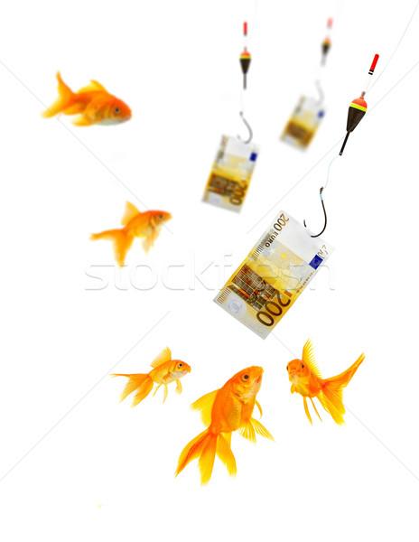 Goldfish aquarium blanche poissons verre Finance Photo stock © bloodua