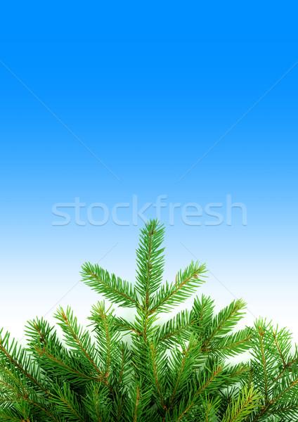 Christmas struktura zielone odizolowany niebieski charakter Zdjęcia stock © bloodua