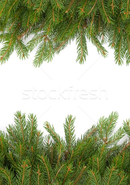 Karácsony váz zöld izolált fehér erdő Stock fotó © bloodua