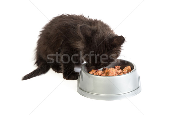 черный котенка еды кошки продовольствие белый Сток-фото © bloodua