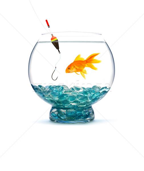 Goldfisch Aquarium weiß Wasser Fisch Glas Stock foto © bloodua