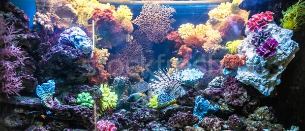 Fotoğraf tropikal balık Dubai akvaryum su Stok fotoğraf © bloodua