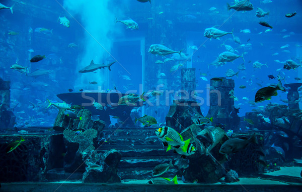 Stingray fish. Aquarium tropical fish on a coral reef Stock photo © bloodua