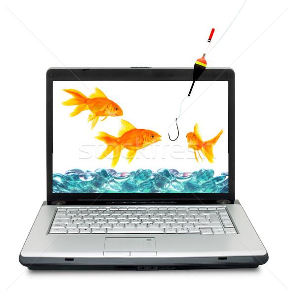 Akvaryum balığı akvaryum yalıtılmış beyaz Internet balık Stok fotoğraf © bloodua