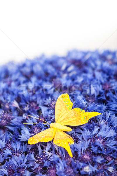 Stock photo: Spring blue cornflower with yellow butterfly