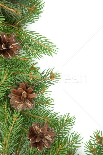 Natale verde isolato bianco sfondo Foto d'archivio © bloodua