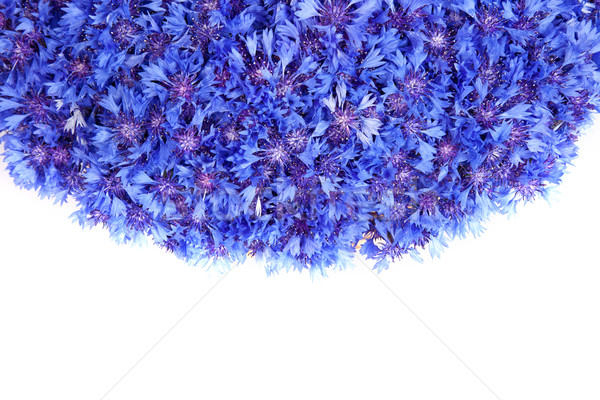 Beautiful spring flowers blue cornflower on background Stock photo © bloodua