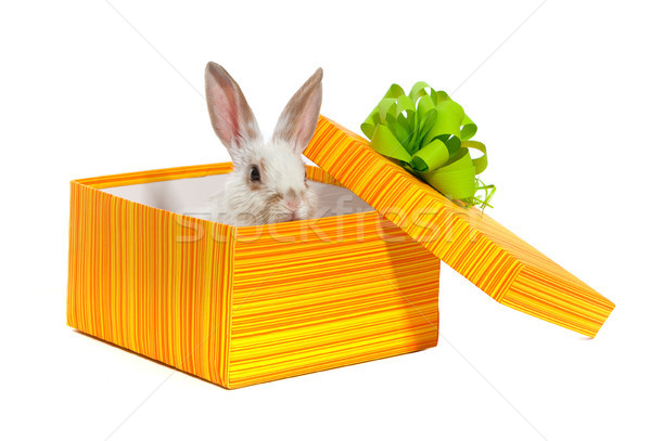 The rabbit in the yellow box Stock photo © bloodua
