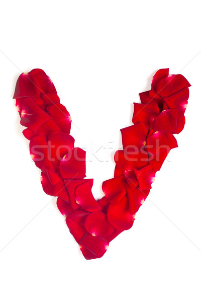 Letter V made from red petals rose on white Stock photo © bloodua